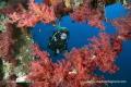 Model soft corals Giovanna Nikon D3 Zoom f2.81424 Seacam housing two strobes 150 Digital f2.8/14-24 f28/14-24 f2 8/14-24 f2.814-24 f2.8 14-24 f2.8/1424 f2.8/14 24