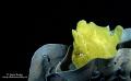 Night diving Bohol. Bohol