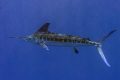 photo taken while snorkeling about 1020 miles off coast Cancun Mexico 10-20 10 20