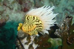 Unknown nudibranch !!! If somebody know his name, please... by Alessandro Reato