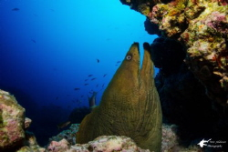 Green Moray shot with Sony RX-100 by Eric Addicott