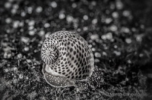 Dots, dots, only dots ... in bw by Marco Gargiulo