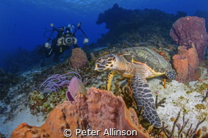 How to photograph a turtle by Peter Allinson