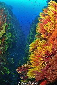 canyon by Oscar Miralpeix