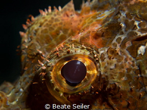 Scorpionfish eye by Beate Seiler