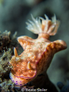 Beauty Nudi by Beate Seiler
