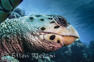 Got to spend some time with this guy in Little Cayman - U... by Ellen Rierson