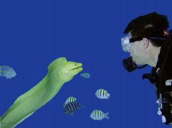 """Psycho, a green moray eel in Grand Cayman. """"We've got to ... by Trisha Urban"""