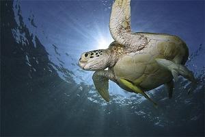 Turtle with bodyguards by Iyad Suleyman