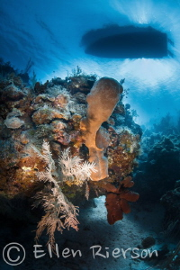 Bloody Bay Wall in Grand Cayman. Shot with Canon T2i/Naut... by Ellen Rierson