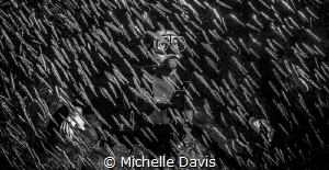 In amongst the silversides by Michelle Davis