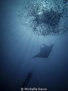 Diver, Manta, Bubbles! by Michelle Davis
