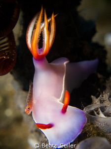 Bulocki with small goby on top by Beate Seiler