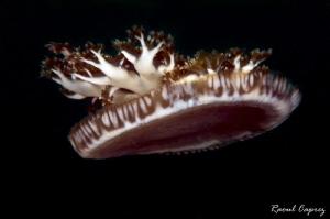 Jellyfish crown by Raoul Caprez