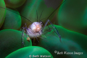 """Lunch"" 