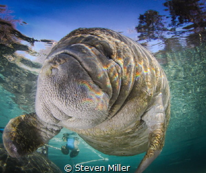 Rainbow reflections from the surface chop made a prism ef... by Steven Miller