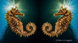Hyppo twins, edited on Ipad with Reflection App by Marco Gargiulo