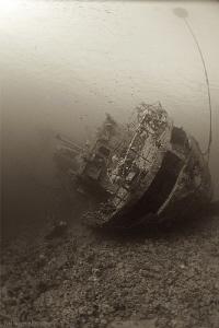 """""""Oblivion"""" Cedar Pride Wreck by Iyad Suleyman"""