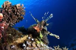 fish by Serhat Tasgedik