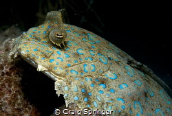 Rare chance to shoot up on a flounder by Craig Springer