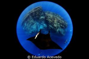 CANON 8-15MM.Revillagigedo Island by Eduardo Acevedo