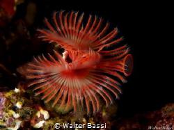 underwater flower  by Walter Bassi