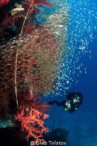 Diving at Satil wreck by Gleb Tolstov