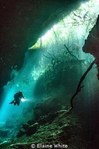 Ponderosa, one of Mexico's Cenotes by Elaine White