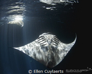 HALLELUJAH