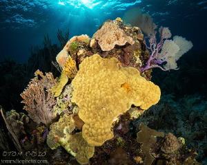 Coral Reef Bahamas by Tom Radio