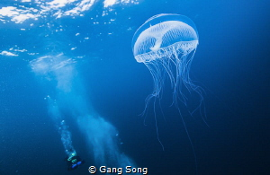White spirit in the cold blue by Gang Song