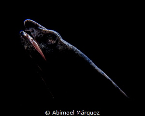 Snake Eel,  Backlighting. by Abimael Márquez
