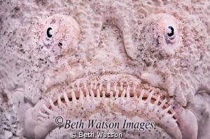 Stargazer (Uranoscopidae) by Beth Watson