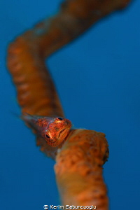 If you've ever photographed this gobi you may know how fa... by Kerim Sabuncuoglu