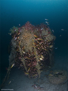 Inchcape 1 (wreck, 32 m deep) by Iyad Suleyman