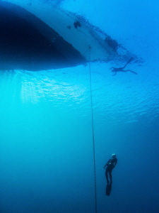 free diver ascending to the bow of Silolona.  Compact cam... by Paul Colley
