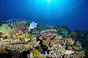 .... Maldives by Oscar Miralpeix