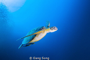 Simple Turtle by Gang Song