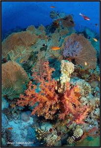 Reef. by Sergey Lisitsyn