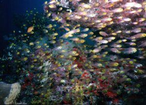 taken at MAA giri kuredu Maldives, in only 5ft of water by David Baxter