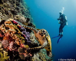 Hawksbill turtle with my husband by Elaine Wallace