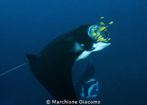 Manta point.Raja Ampat