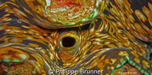 Giant clam by Philippe Brunner