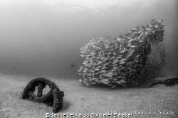 Shot of a fragment from El Vencedor, a shipwreck in Cabo ... by Jaime Leonardo Gonzalez Salazar