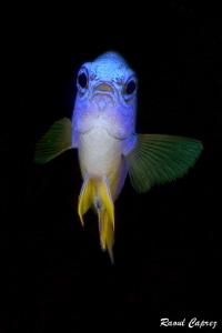 Blue face to face by Raoul Caprez