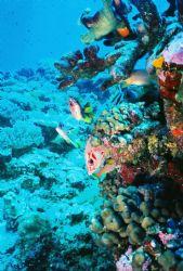 Great Barrier Reef by Morgan Douglas