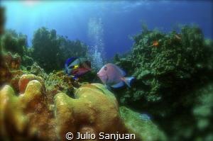 Please kiss me by Julio Sanjuan