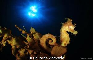 Endoscopic len. by Eduardo Acevedo