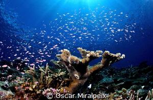 ... Maldives by Oscar Miralpeix