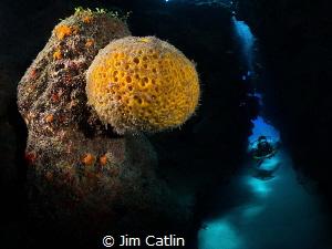Orange ball sponge and diver inside swim through at Eden ... by Jim Catlin